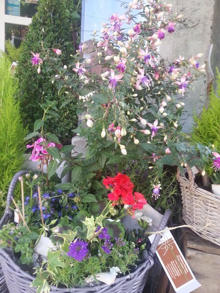 Fleuriste plante ext rieur h fleur et moi valenciennes for Achat plante exterieur