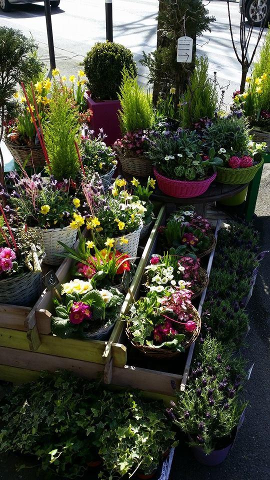 Plantes extérieures jardins de plantes by Hé fleur et moi Valenciennes fleuriste Valenciennes