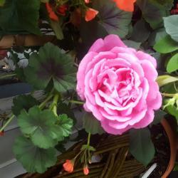 Fête des mères chez Hé fleur et moi Valenciennes fleuriste