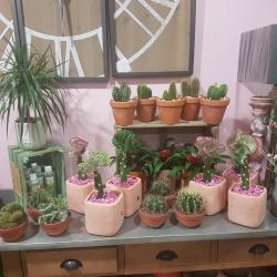 Cactus chez hé fleur et moi fleuriste de Valenciennes idée cadeau