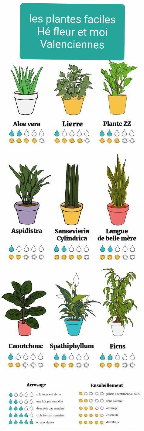 Plantes facile d entretien chez hé fleur et moi fleuriste de Valenciennes