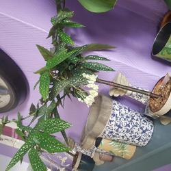 Le tamaya une plante graphique et tendance chez hé fleur et moi fleuriste de Valenciennes