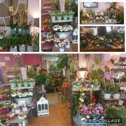 fleuriste Valenciennes hé fleur et moi fleuriste de Valenciennes bouquet plantes decoration