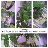 Le tamaya une plante graphique et tendance chez hé fleur et moi fleuriste