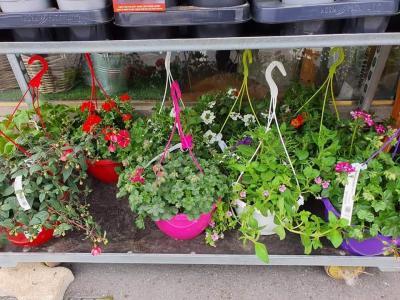 Suspension de plantes annuelles Valenciennes