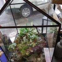 Les terrariums chez hé fleur et moi fleuriste de Valenciennes idée cadeau