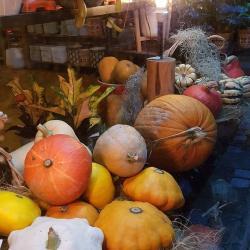 fleuriste Valenciennes a découvrir chez hé fleur et moi  citrouille d'automne