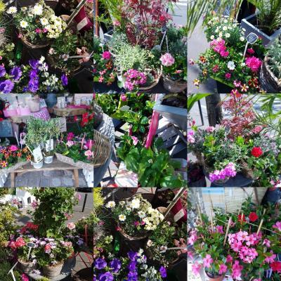 Plantes anniversaire naissance mariage chez hé fleur et moi fleuriste de Valenciennes