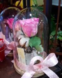 Rose éternelle sous cloche fête des mères chez hé fleur et moi fleuriste Valenciennes