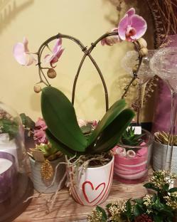 Orchidée coeur saint Valentin Valenciennes fleuriste