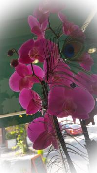 Fleuriste Valenciennes orchidée