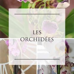 orchidée fleuriste de Valenciennes Hé fleur et moi livraison gratuite Anzin La sentinelle