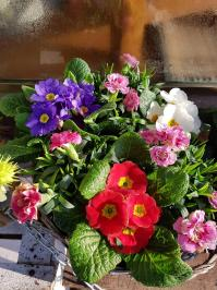 Coupe plantes tombe cimetiere potée de plantes Valenciennes saint jean saint roch fleuriste