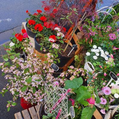 Plantes fleuriste valenciennes fête des mères
