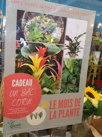 Le mois de la plante chez hé fleur et moi fleuriste de Valenciennes