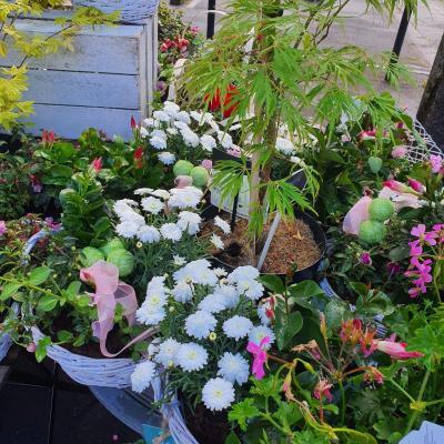 Pépinière fleuriste de Valenciennes